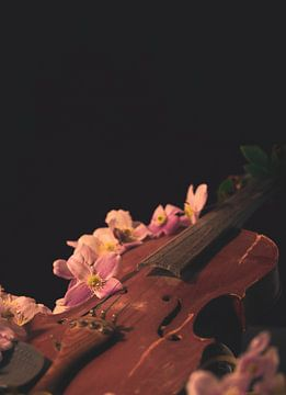 Die Band, Violine von met Jessica / Fotostudio Drachten