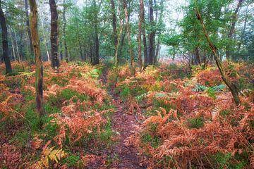Wildwissel tussen de varens in de herfst van Cor de Hamer