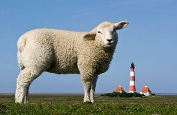 Lamm vorm Westerhever Leuchtturm van Annette Sturm