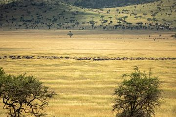 Tanzania van Gonda van Wijk