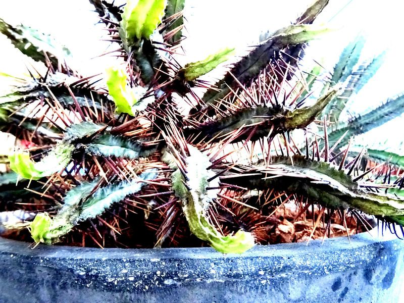Kamerplant: SciFi Cactus 2 - 2 van MoArt (Maurice Heuts)