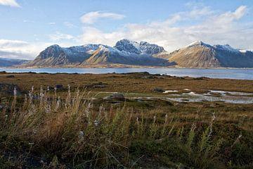 View from Vestvågøy van
