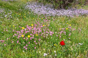 Bloemen op Lesbos van