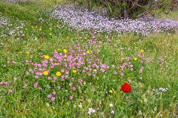Bloemen op Lesbos von Rob IJsselstein