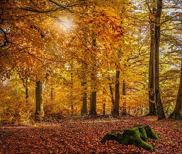 Herbstliche Buchenwälder im Naturpark Rheingau-Taunus bei Engenhahn van