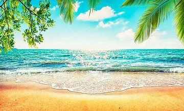 Zee Zand Zon van Manjik Pictures
