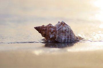 Dromen bij de zee grote schelp in het zand van Tanja Riedel