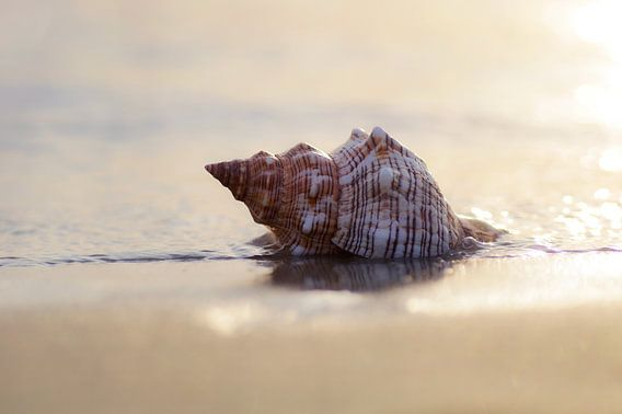 Träume am Meer große Muschel im Sand