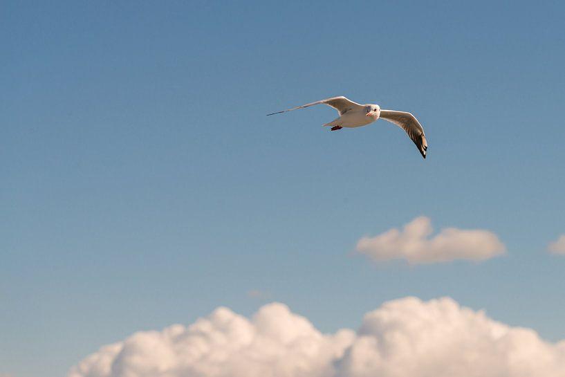 Free as a bird van Damien Franscoise