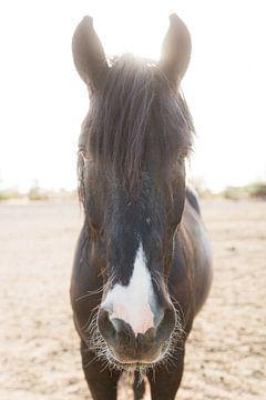 Mustang von Anouschka Rokebrand