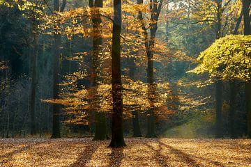 Herfst bos in tegenlicht van Ad Jekel