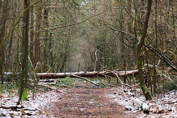 Storm in het bos op een besneeuwde morgen van