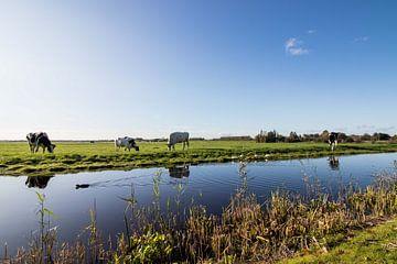 Holländische Landschaftswiese von Déwy de Wit