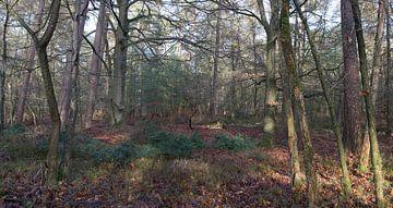 Een bos panorama van Gerard de Zwaan