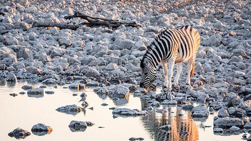 Steppezebra / Zebra bij waterput rond zonsondergang - Etosha, Namibië van Martijn Smeets