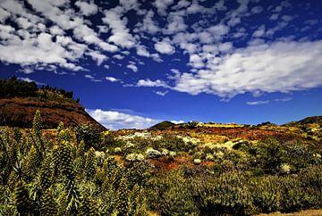 Natuur op TENERIFE    prachtige wildgroei in helder blauwe lucht met wolkjes von Willy Van de Wiele