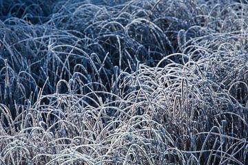 Carex sur Douwe Schut