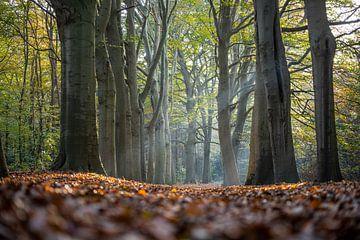 Strahlender Herbst von Sake van Pelt