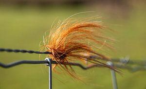 Bosje haar van stieren aan een hek