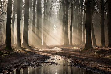 Forêt de conte de fées sur Rob Willemsen