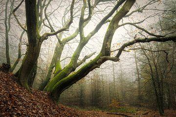 Nebelwald, Wald von Speulder von Bob Vandenberg
