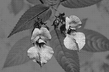 Wilde orchidee van Gera Wijlens