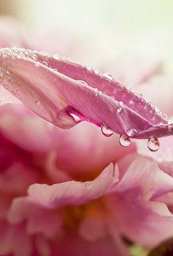 regendruppels van Marika Rentier
