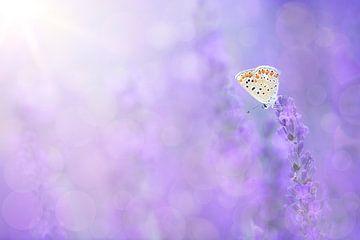 Schmetterling im Lavendelfeld von Elles Rijsdijk