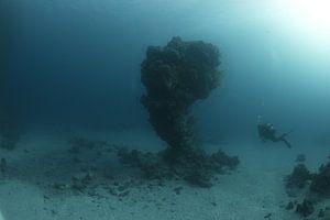 koraalbonk met duiker