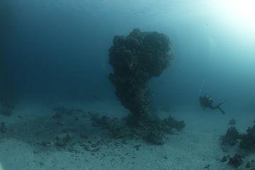 koraalbonk met duiker van