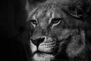 Schwarze und weiße Löwin von Jan Jacob Alers