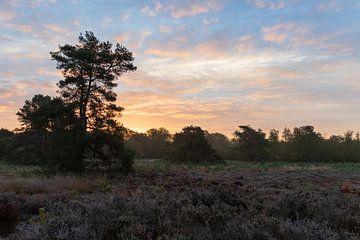 Heideveld mit einem schönen Sonnenaufgang auf der Veluwe von Photo Henk van Dijk