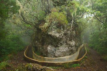Levada in Madeira van Michel van Kooten