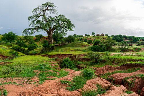 Magische Baobab van