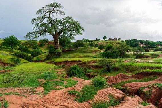 Magische Baobab van Steven Groothuismink