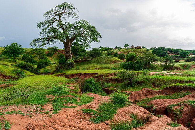 Majestic Baobab sur Steven Groothuismink