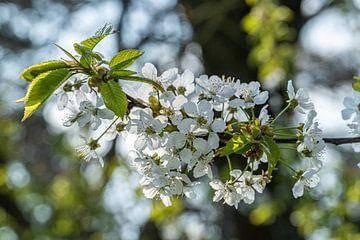 Blütenzauber von Thilo Wagner