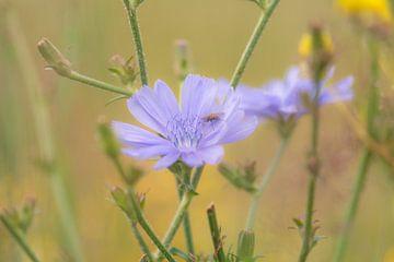 lila wilde bloem van Tania Perneel
