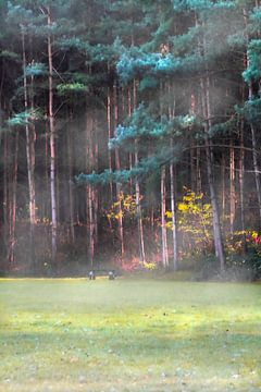 Ochtend Mist Kust de  Zon van PhotoManiX Digital Photography