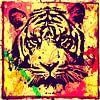 Tiger - Splash Pop Art PUR - 3 Colours - Part 1 van Felix von Altersheim thumbnail
