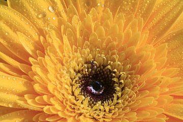 Yellow with water drop van hetto hettema