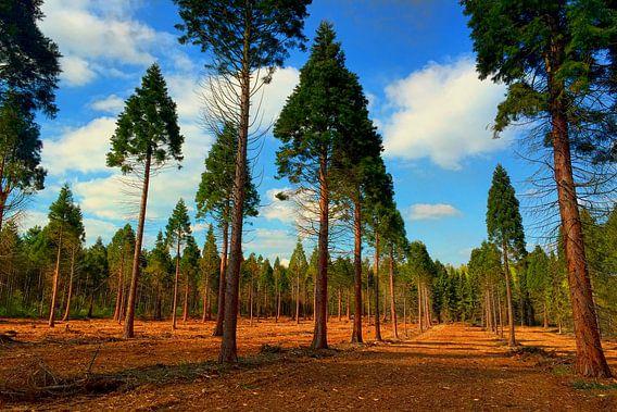 Wald Rodung