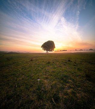 Der Baum von Corné Ouwehand