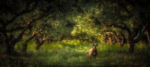 """""""The Sheep's Garden"""""""