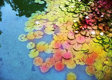 Waterlelies 2 van Wilfried van Dokkumburg