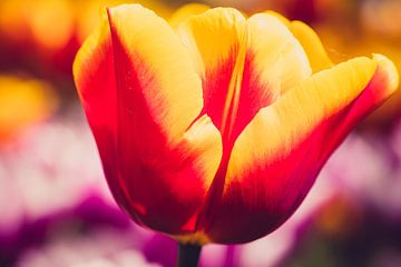 bloem van Gert Slagmolen