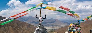 Schedel van een jak op een bergtop in de Himalaya, Tibet