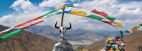 Schädel eines Yak auf einer Bergspitze in den Himalaya, Tibet