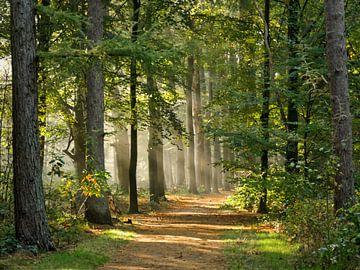 bospad van Odette Kleeblatt
