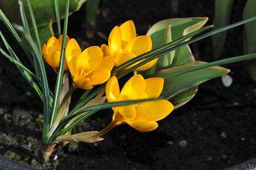 Bloemen in de zon van Dennis Visser